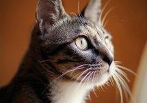 Mao the Cat
